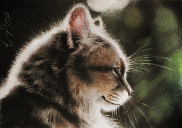 Kot okraszony światłem