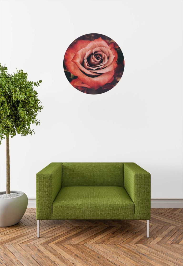 Róża 03